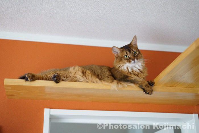 カメラマンちの猫ソマリのかわいいおもしろい写真