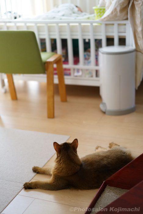 カメラマンちの猫ソマリと赤ちゃんのかわいいおもしろい写真