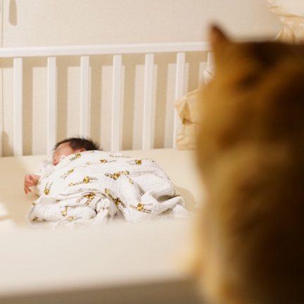 猫ソマリの面白かわいい写真