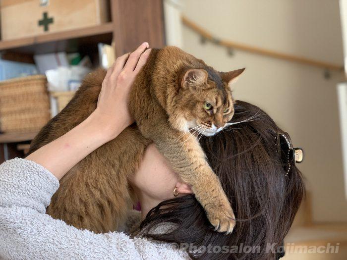 猫写真 ソマリ かわいい猫 猫吸い